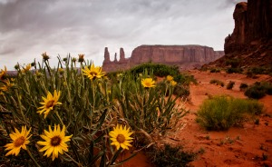 MOnument Valley desert dasies
